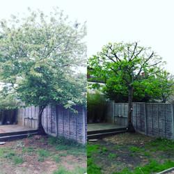 tree surgery | West London