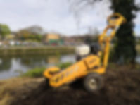 Stump Grinding - Eel Pie Island