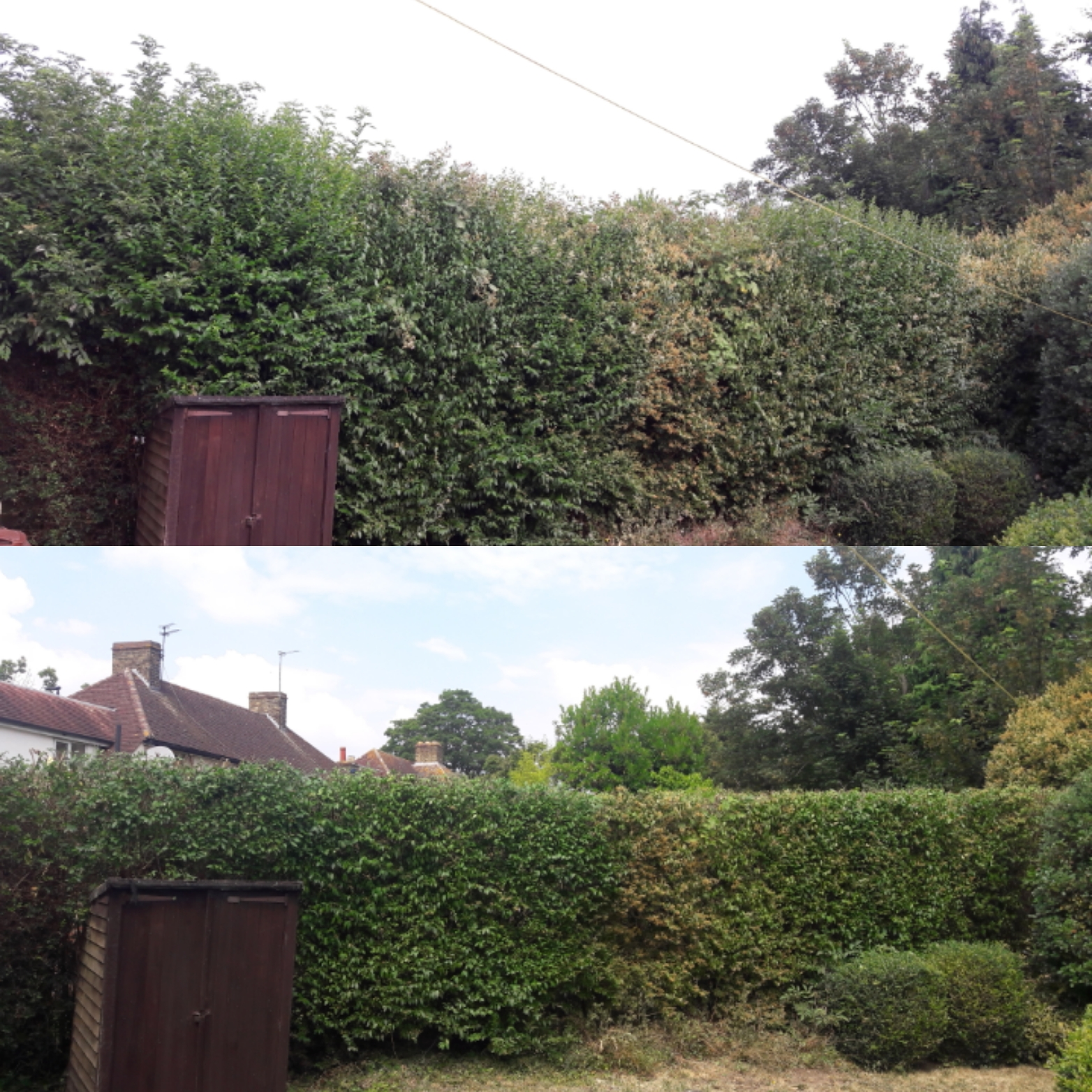 Hedge pruning | West London