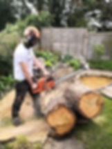 Tree surgeon West London