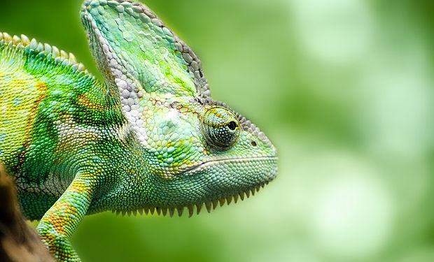 Competition C - Chameleon.jpg