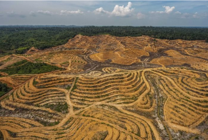 Deforestation - Credit: Getty Images (Sutanta Aditya)