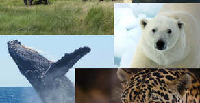 March 3 - World Wildlife Day - Let us Celebrate & Reflect