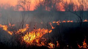 Australian Bushfire Disaster - Help our Wildlife