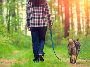 The Importance of Energy When Walking Your Dog