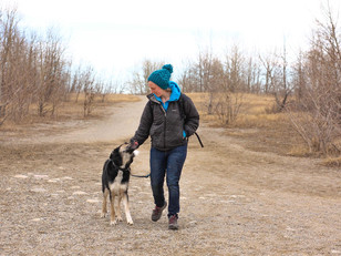 Building Your Relationship With Your Dog - The On-leash Walk