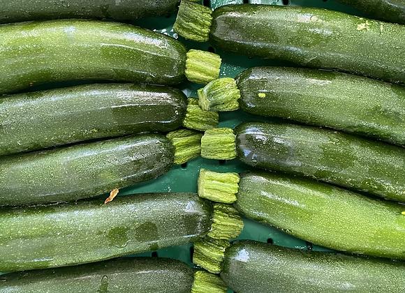 Courgette verte / CAB
