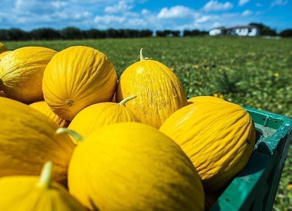 Melon jaune KG