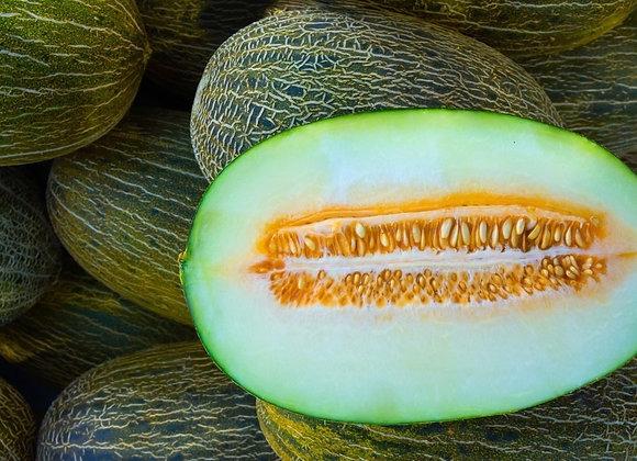 Melon vert KG