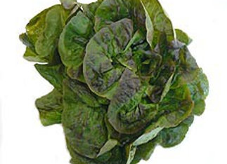 Salade Rougette de Montpellier