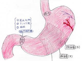 胃について Part1