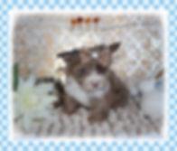 XO03F48fTp2S6J9JE4ic+A_thumb_1778a.jpg
