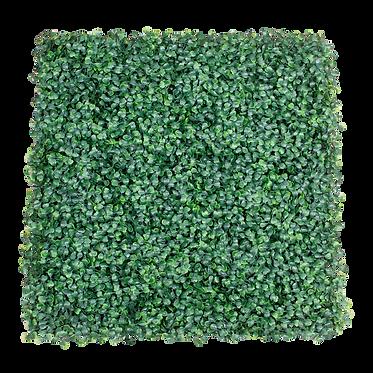 Muro Verde - ARRAYÁN NATURAL