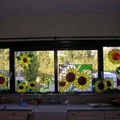 Variatie aan zonnebloemen