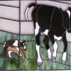 Hond jaagt op koe