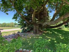 inisfree tree.jpeg