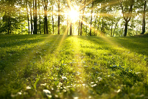 Sunlight in the green forest, spring tim