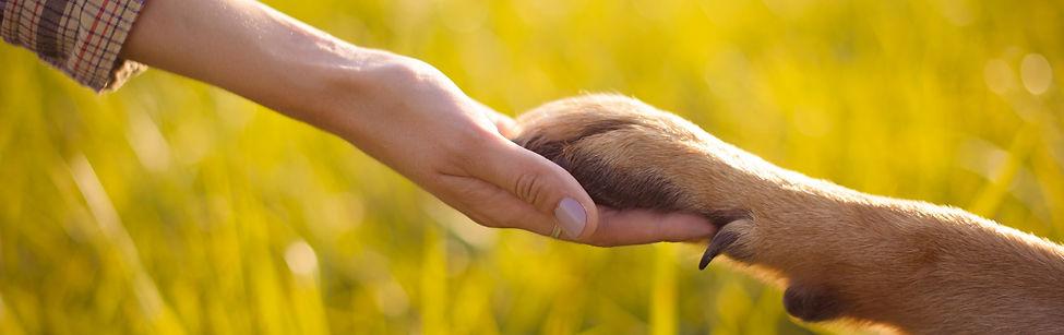 FindHundGlück Coaching für Hundehalter