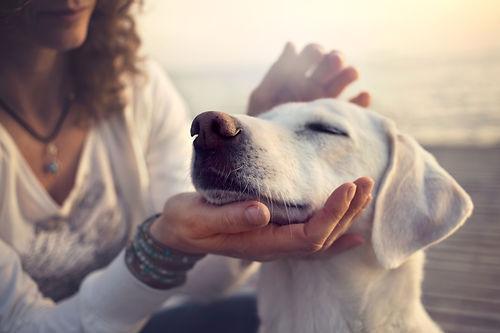 owner caressing gently her dog.jpg