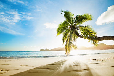 Tropical Palm Tree in the Sunshine. Para