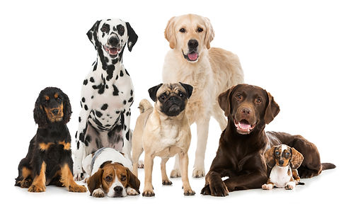 Different dogs isolated on white.jpg