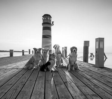 Kopie von Friendship and Dogs_edited.jpg