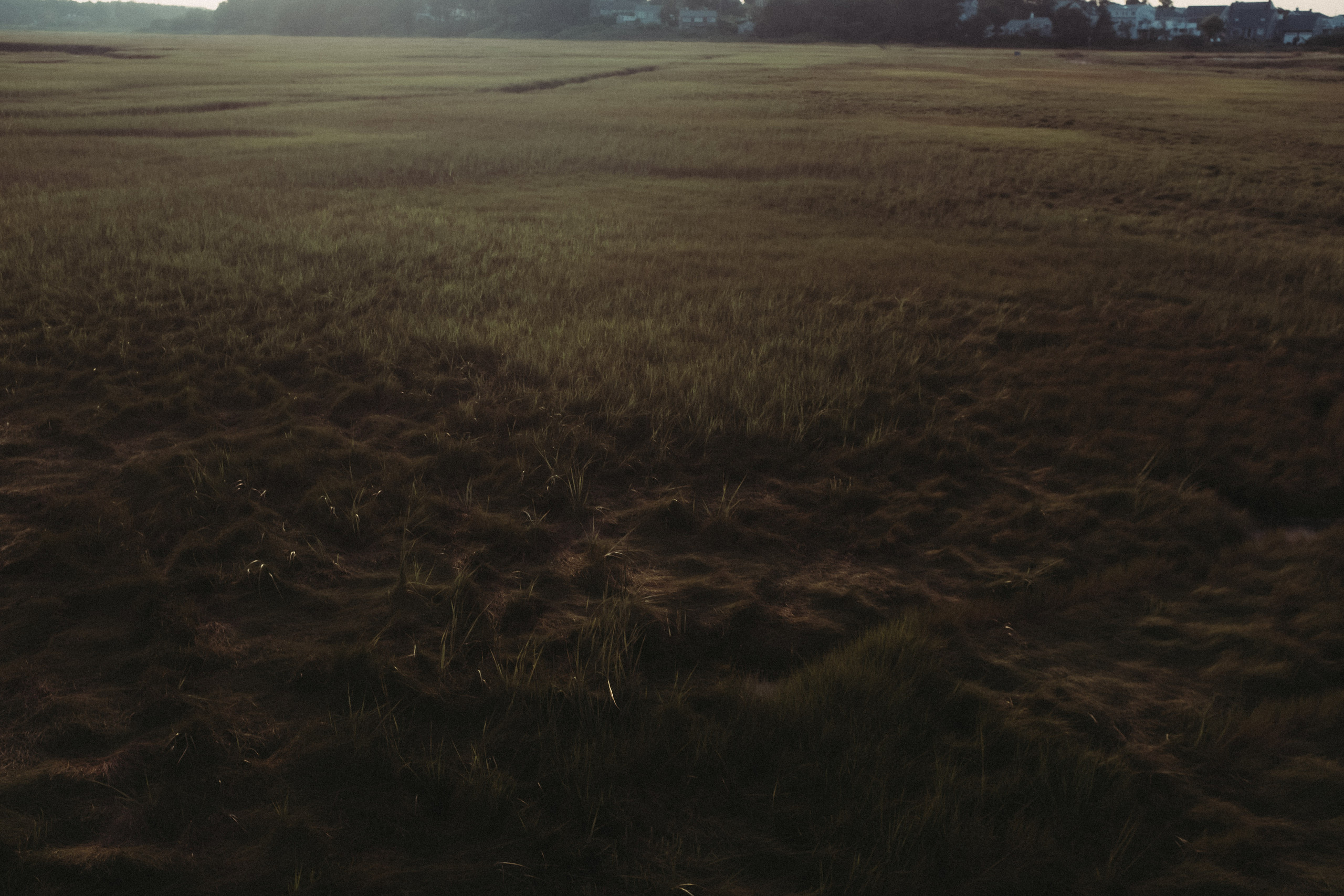 Grass in a marshy bog.