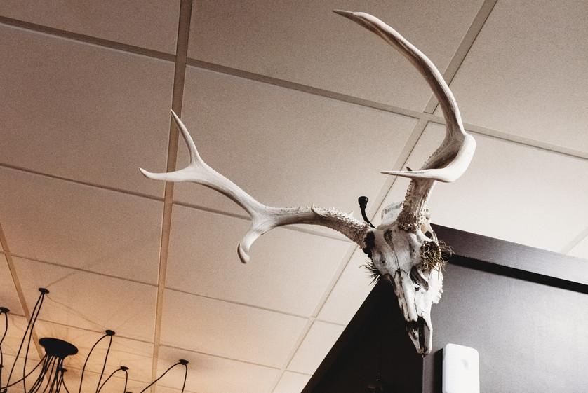 Huge horned skull on the walls