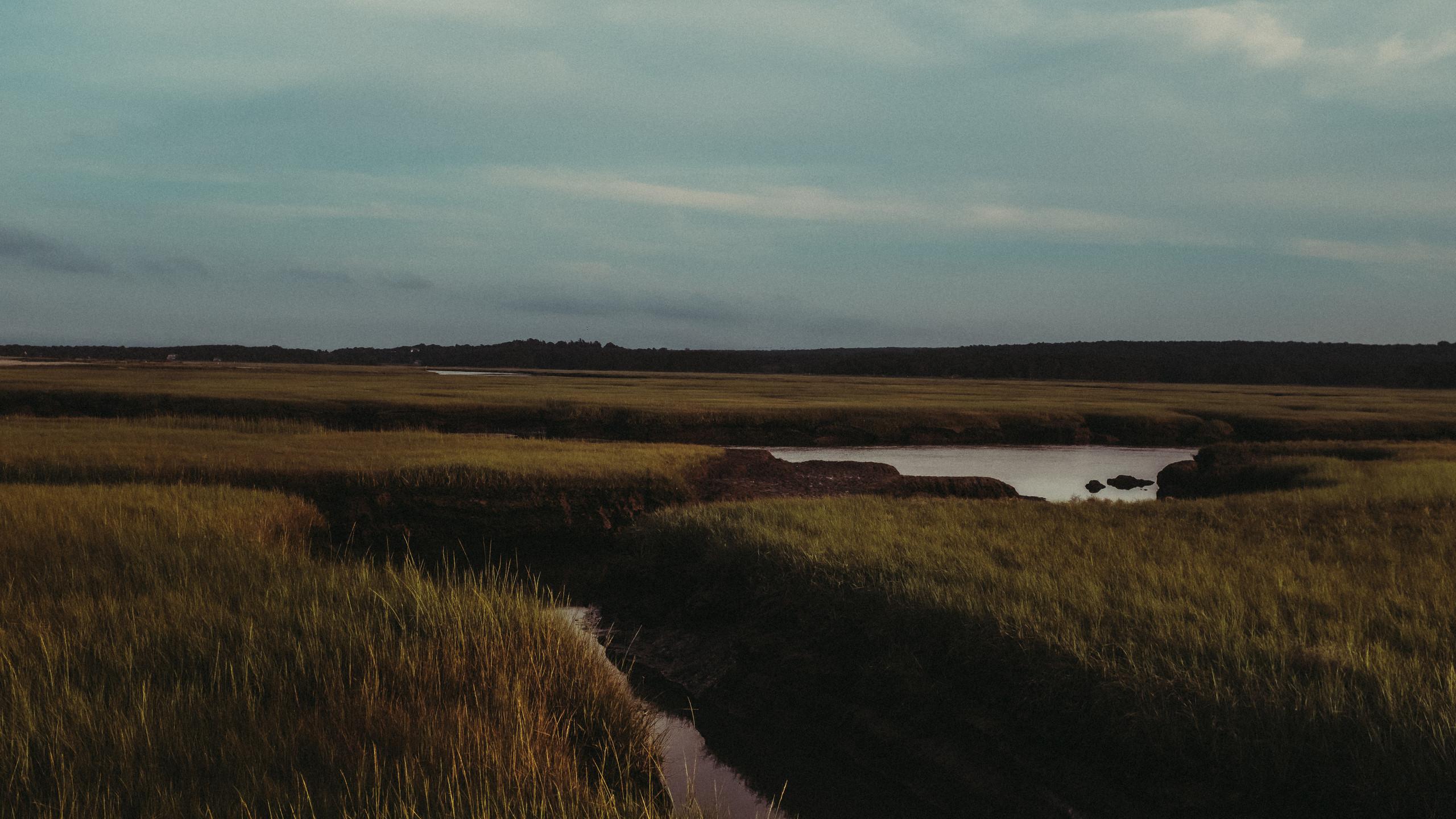Bogs at Sandwich Beach, Cape Cod