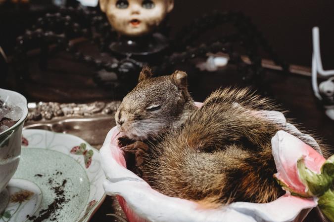 Little taxidermy squirrel