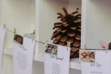 Campy wedding decorations: table settings hanging near postcards, stuffed animals, and camping photos. Close up on a pine cone.