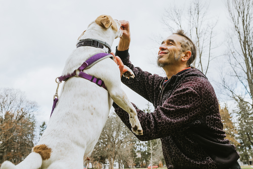 Owner of the The Renaissance Pet, Moti Zimmerman. He's holding a treat up and feeding a white dog with a brown ear and spot.