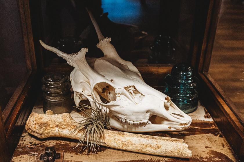 Close up of tall case of skulls