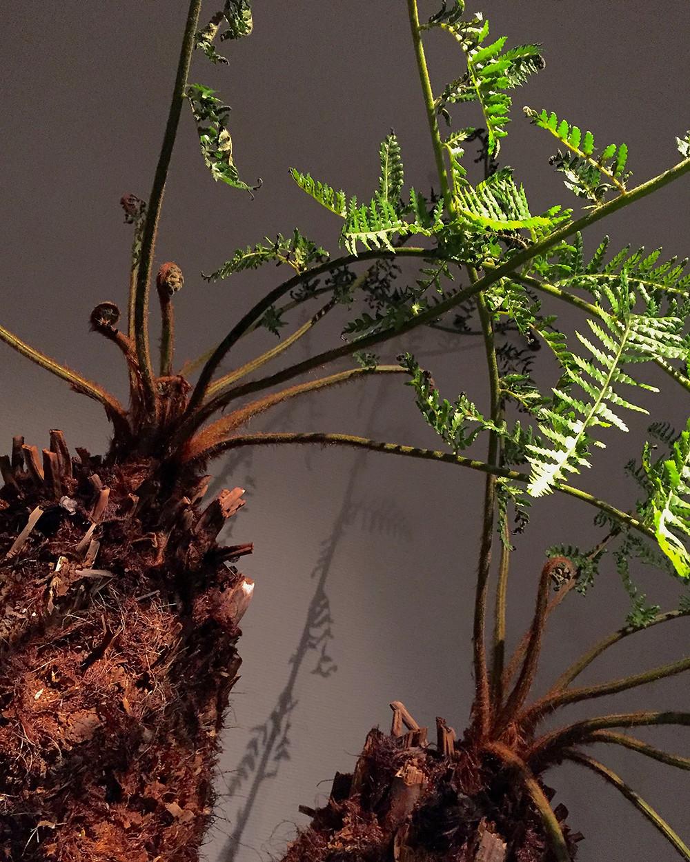 #ウルトラ植物博覧会2016