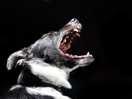 ¿Cuánto vale un caso de mordedura de perro?