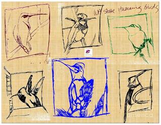 Drawing_WA State Hummingbirds_2011.jpg