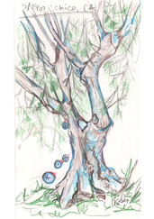 tree 2 study Chico, CA