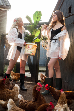 Chickens & mayonaise