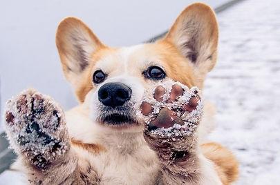 snowy paws.jpg