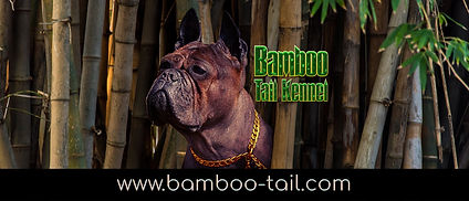 BambooTail.jpg