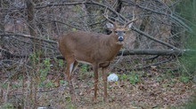 9-Day Gun Deer Hunting Season opens Saturday