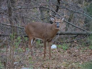 9-Day Gun Deer Hunting Season opens Saturday