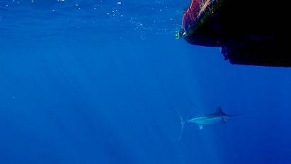B-on-sea-sportfishing # BIBITONIC r-286