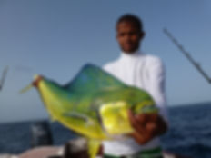 B-on-sea-sportfishing # Corphaena hippurus