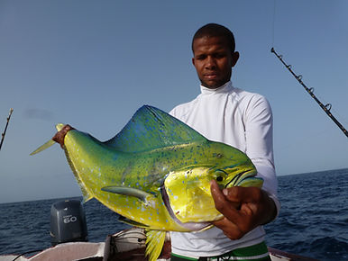B-on-sea-sportfishing # Corphaena hippurus