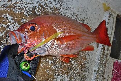 b-on-sea-sportfishing # Red Snapper # BIBITONIC r-286