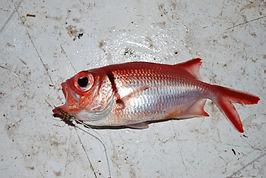 Organisateur de voyage pêche au Cap Vert, île de Santo Antao. Séjour à la carte - www.b-on-sea-sportfishing.com  Organisateur et Skipper Français - DINARD PAUL-LOUP.