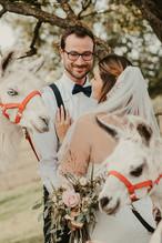 Hochzeit mit Lamas im Alpaka Beach Alling