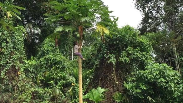 tabitha papaya trim2.mov
