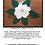Thumbnail: Majestic Magnolia Table Topper